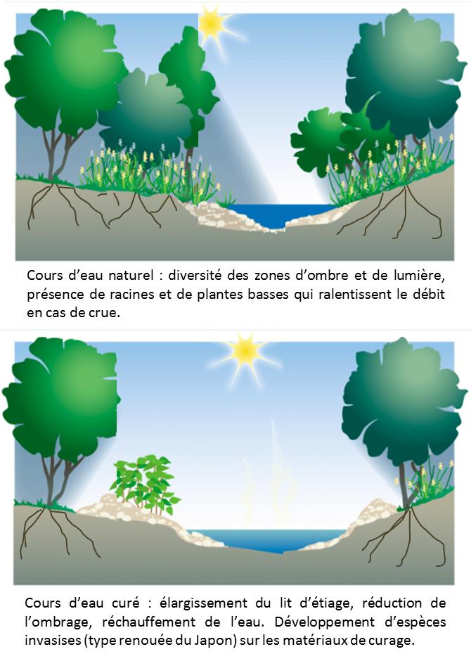 entretien rivieres